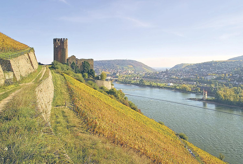 Die Ruine der Burg Ehrenfels am Ufer des Rheins