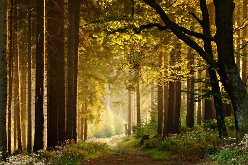 Wald in Deutschland. Thema: Deutschlandreise
