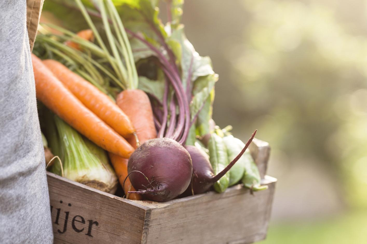 Eine Kiste mit Gemüse. Thema: Fakten über Deutschland
