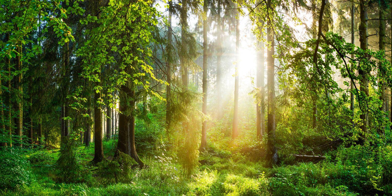 Waldlichtung mit einfallender Sonne