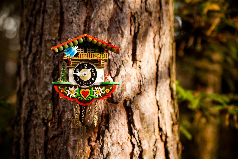 Eine Kuckucksuhr hängt an einem Baum im Wald